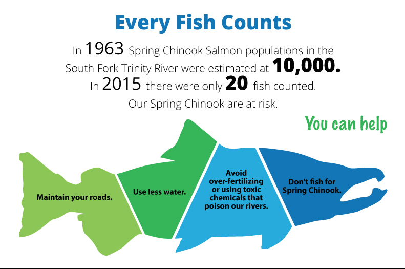 salmon-infographic_cropped